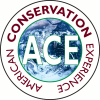 American Conservation Experience Company Logo
